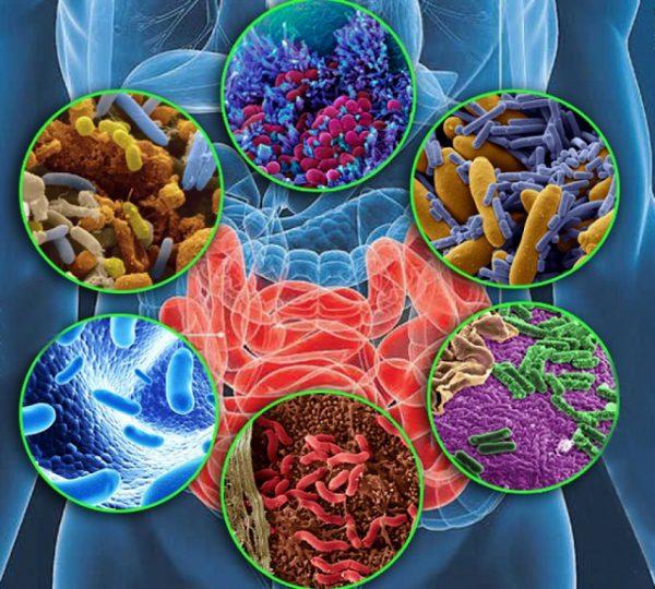 Как восстановить микрофлору кишечника в домашних условиях?