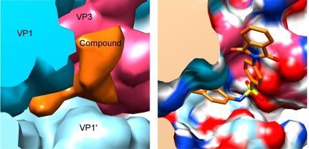 В «доспехах» десятков вирусов человека нашли бреши для лекарств