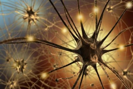 Американские биологи обнаружили «нейронный иммунитет» кожи