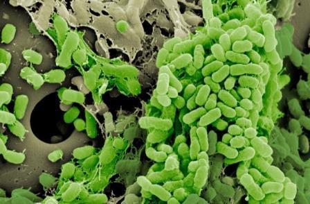 Образ жизни бактерий влияет на их устойчивость к антибиотикам