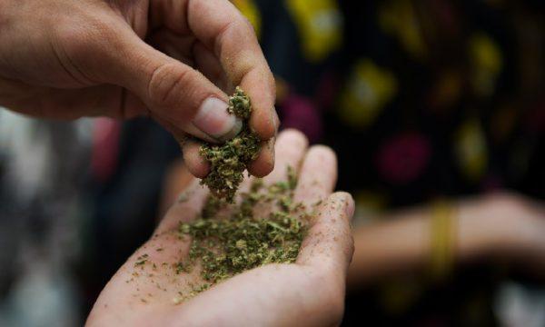 Зависимость от марихуаны – есть ли опасность?